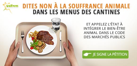 Dites non à la souffrance animale dans les menus des cantines ! - Je signe la pétition