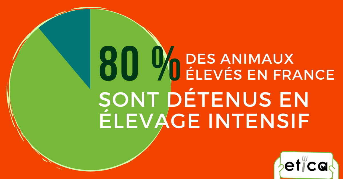 animaux-elevage-intensif