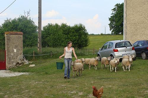 La vie à côté du chantier : l'heure de nourrir les moutons