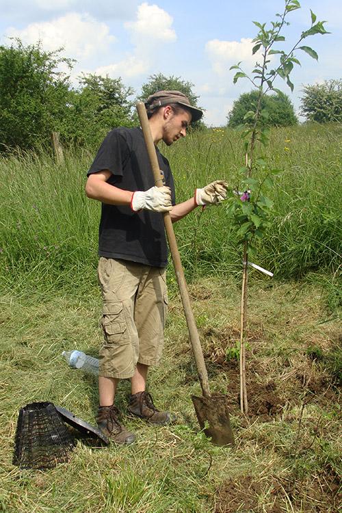 Reconnaissance des essences d'arbres