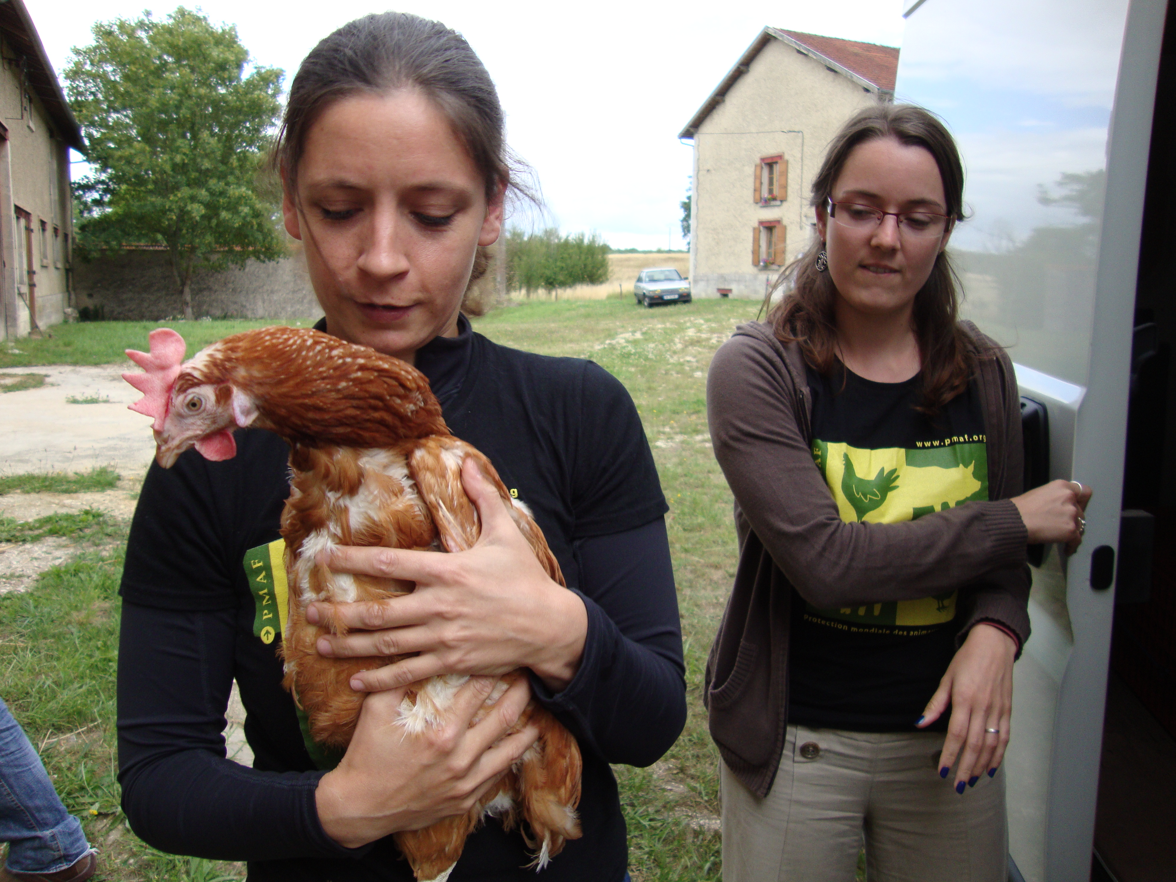 Dès leur arrivée à la Ferme des animaux, les poules sont prises en charge par l'équipe de la PMAF.