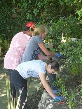 Plantation des végétaux aquatiques