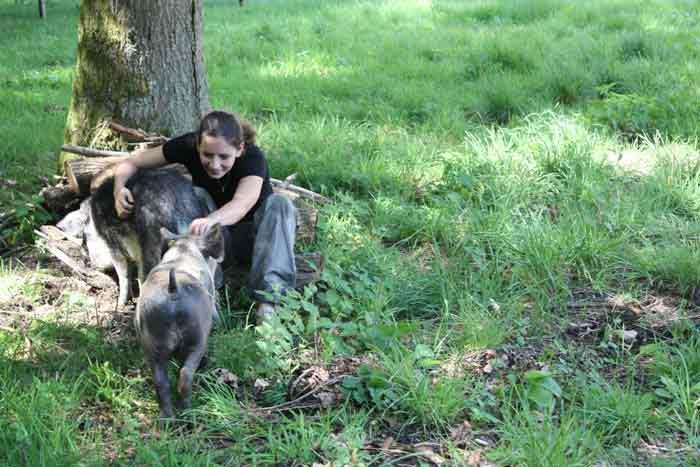 Les deux jeunes cochons recherchent avidement les caresses !