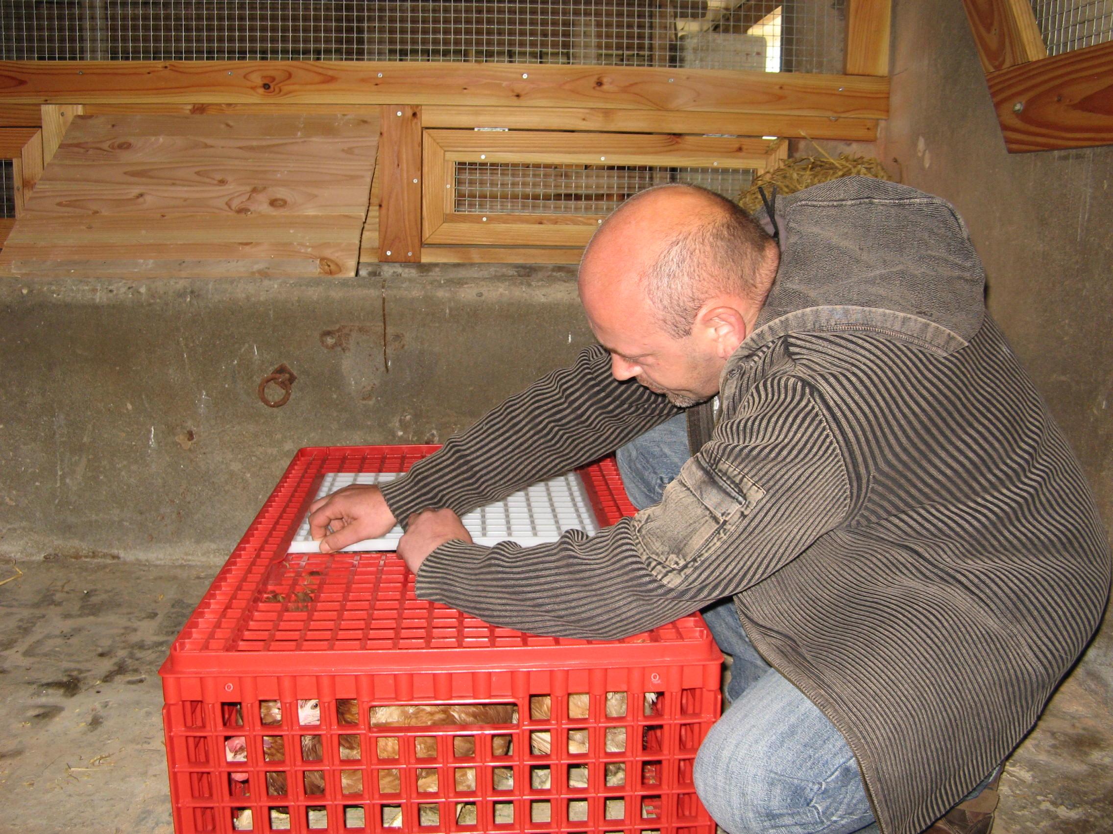 Pascal, le gardien de la ferme, ouvre les premières caissettes.